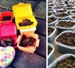 New Company Earns Buckets of Bitcoins By Mailing Boxed Poop